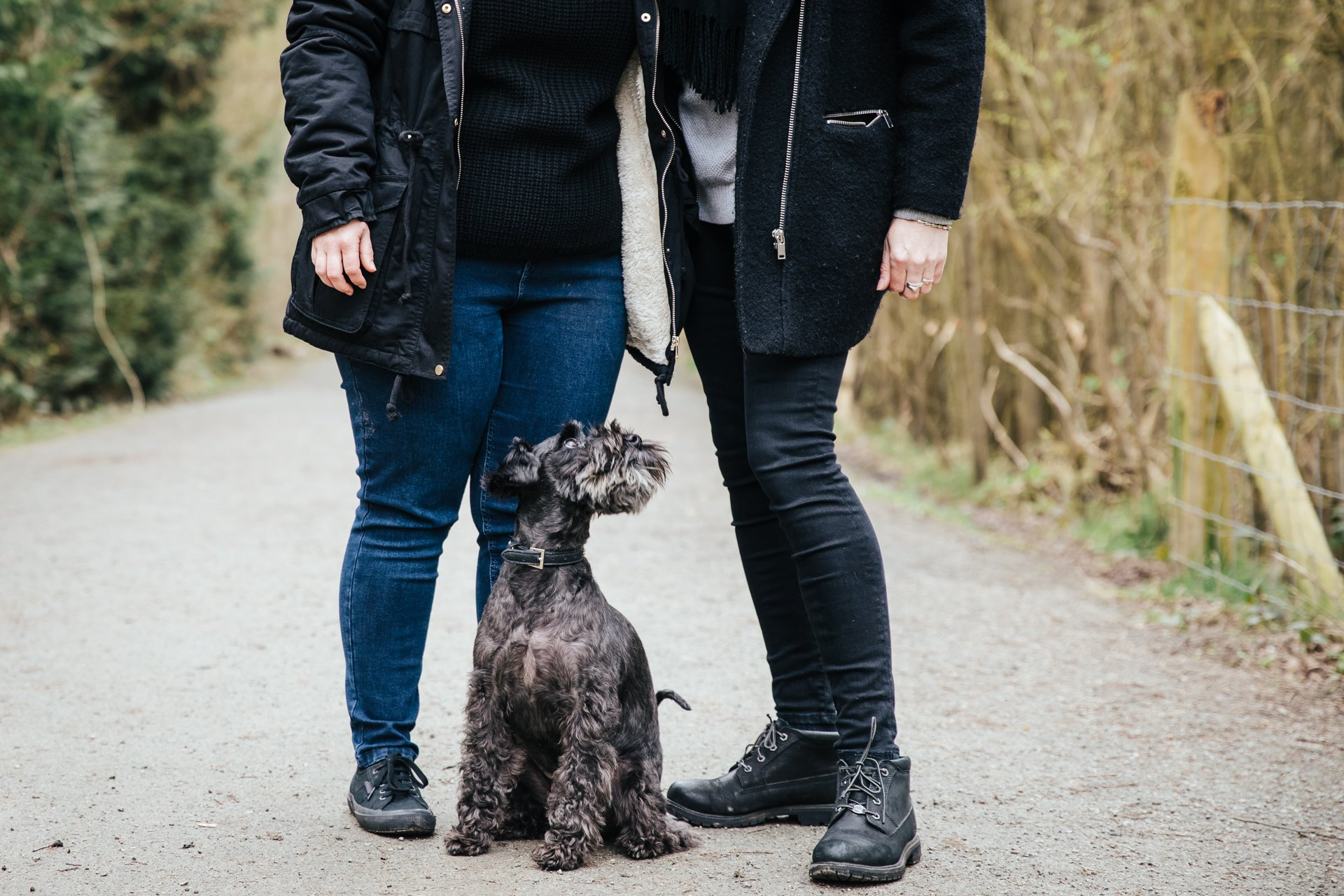 lovely black dog looking at his owners during a woodland walk engagement shoot
