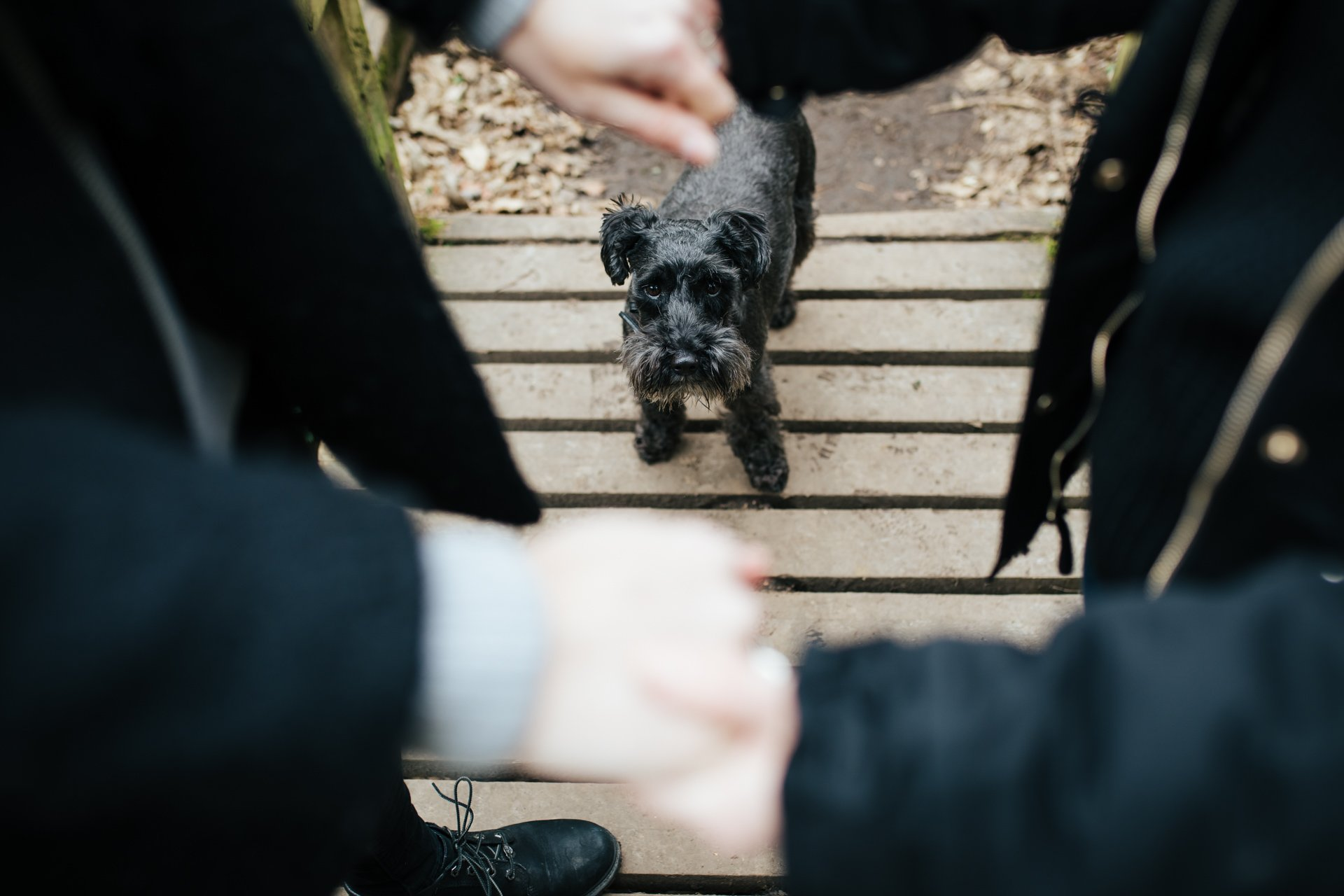 Little Black Dog standing between his owners during their engagement shoot in a woodland setting in Kent