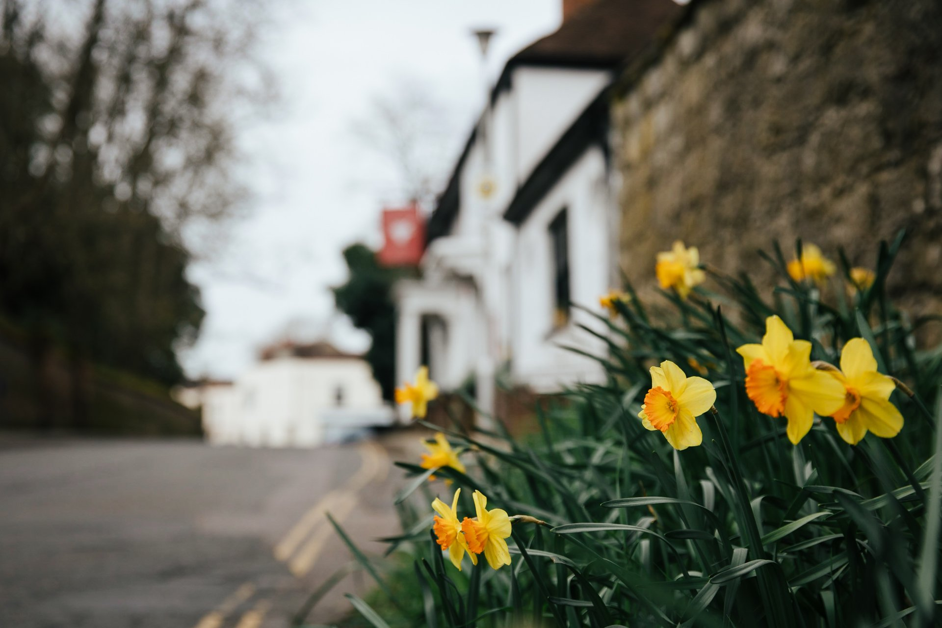 Spring daffodils in front of Kent Wedding Venue, The Bull Hotel