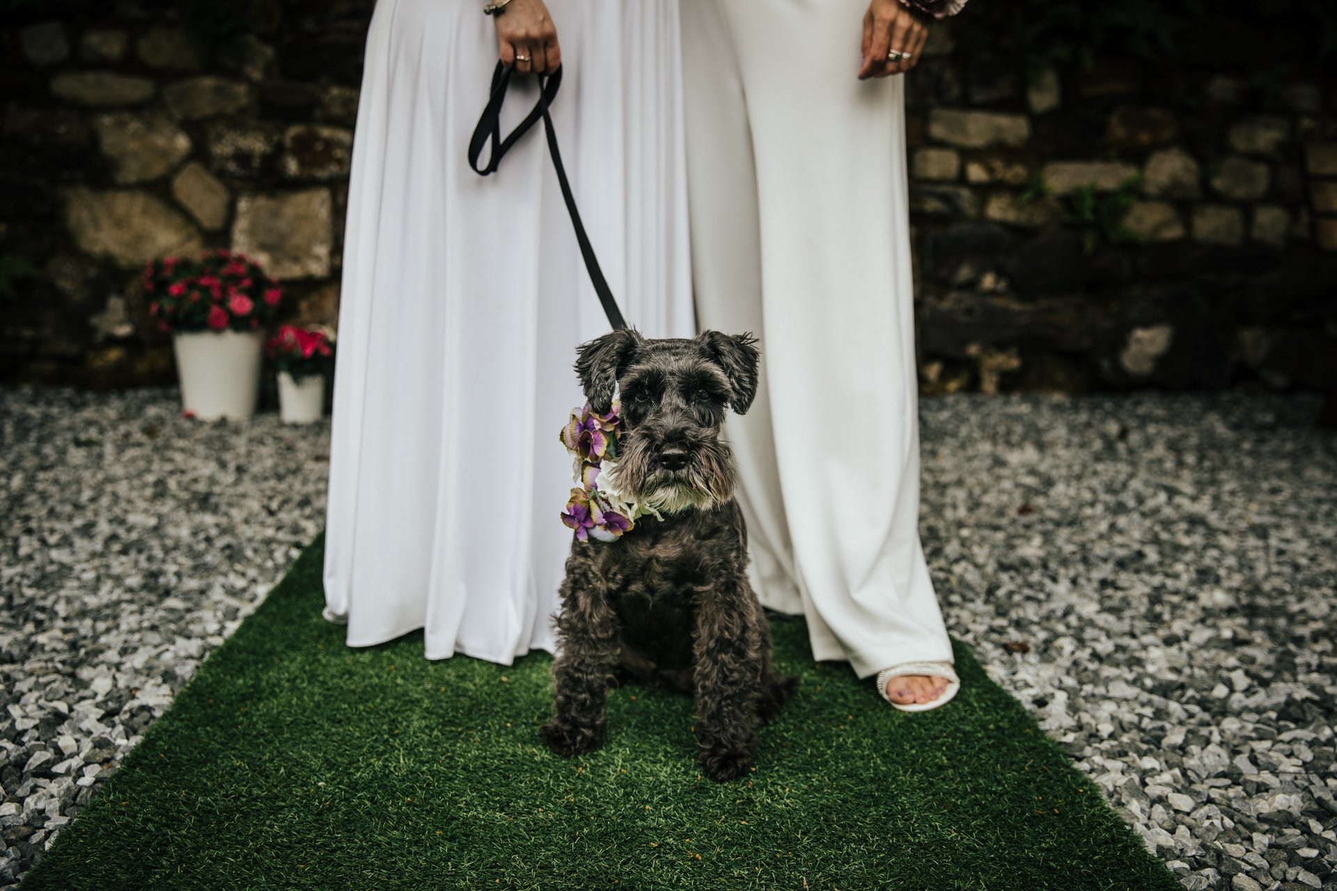 Gorgeous black dog with floral collar at Wedding
