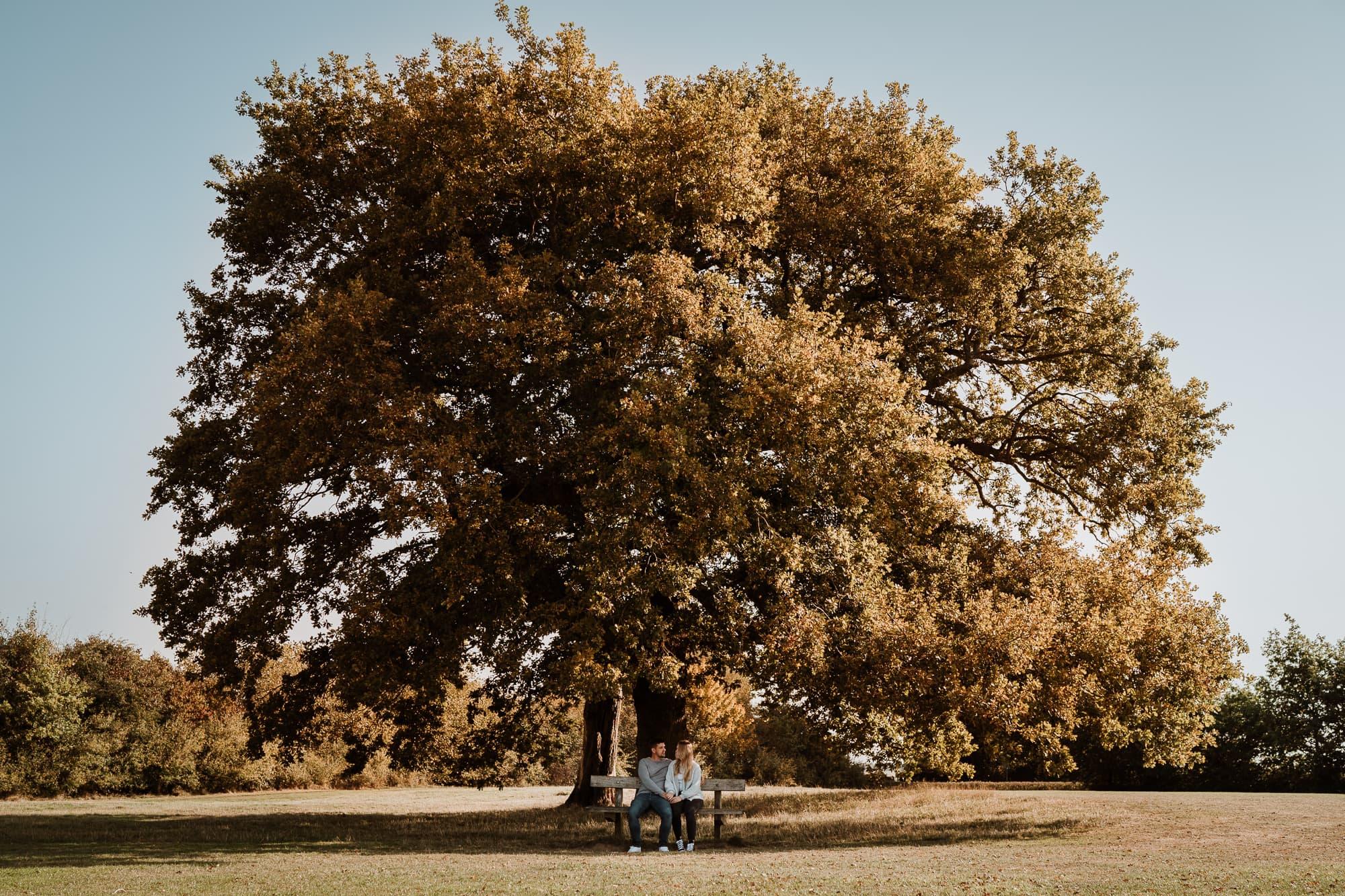 Couple on bench under autumnal tree