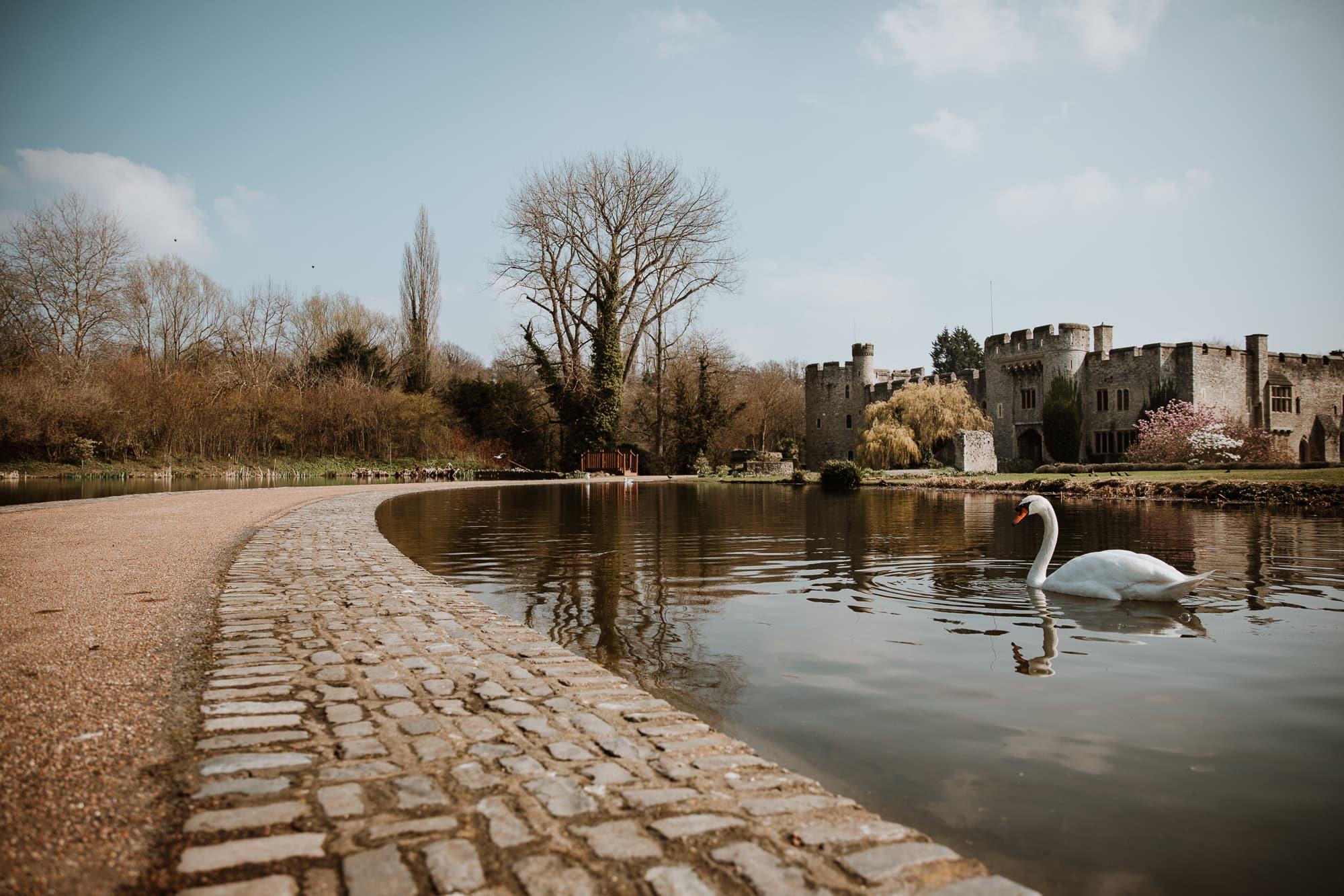 Swan in front of Allington Castle